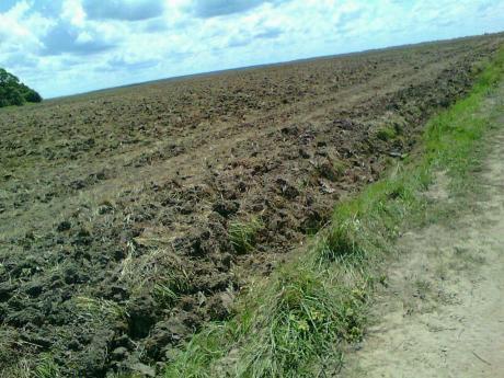 2.685 Has De Campos En El Dpto Paraguari,a 7 Km De La Ruta