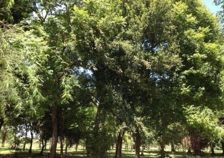 Pilar, 80.000 M2 En Plena Zona Urbana De La Ciudad.