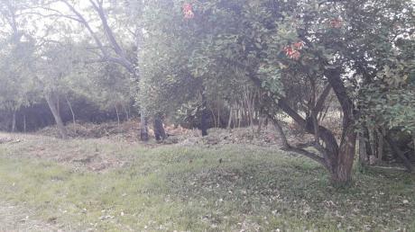 Vendo Terreno En Villa Elisa