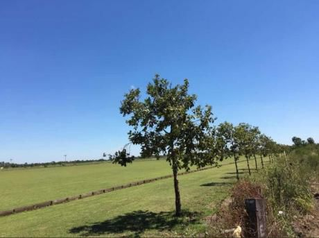 Vendo Terrenos En Surubii De 1500 M2 !! En Zona Alta