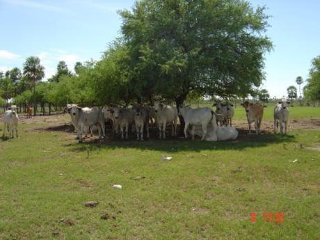 Vendo 18.000 Has En El Chaco S/  Pilcomayo Altura Linea 9 A 170 Kms De  Neuland
