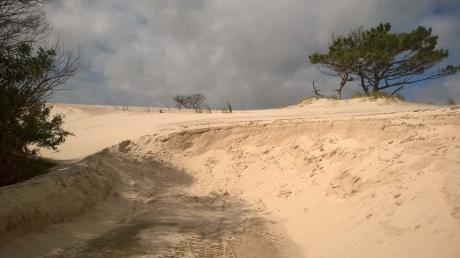 Terreno Frente Al Mar En El Pinar, Punta Pinares