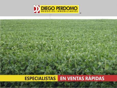 Campo Netamente Agrícola, Excelente Opción