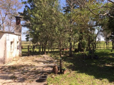Campo En Salto 137has