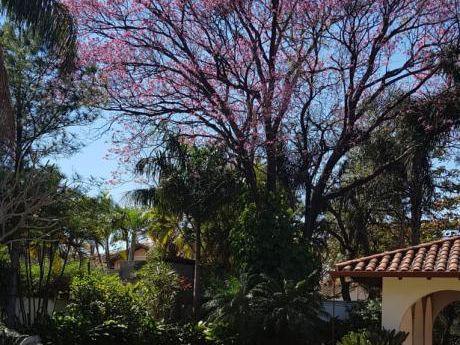 Alquilo Hermosa Residencia En Carmelitas, Semi Nueva