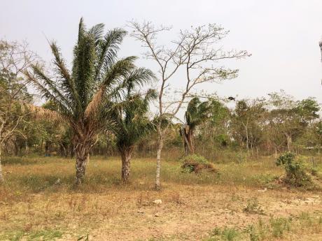 Terreno En El Urubo Comunidad Los Batos