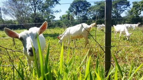 Campo En Nueva Colombia
