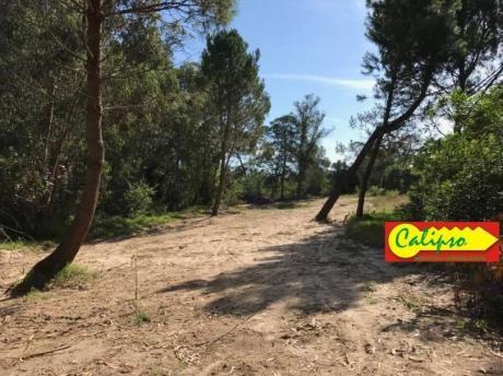 Terreno De 1450 M2 Nivelado - Villa Argentina Norte - Inmobiliaria Calipso