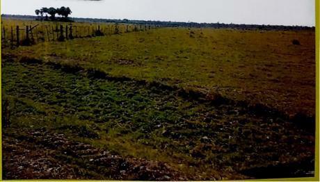 Vendo Ganadera Zona Gral Diaz Chaco Paraguayo