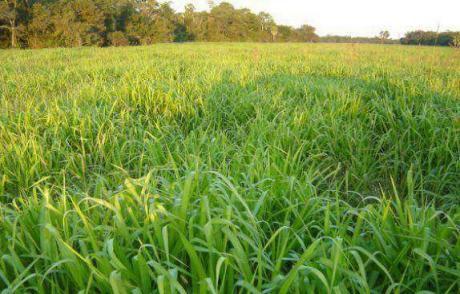 Terreno De 1500 Hectares Para Multiemprendimiento