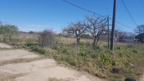 Venta De Terreno En Los Aromos, 7.000 M2, PrÓximo A Ruta 8