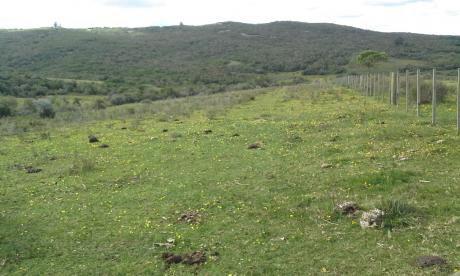 Campo En Venta En Garzón