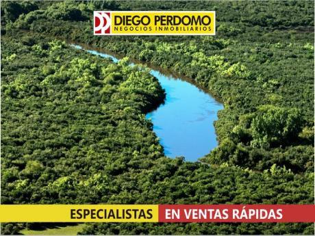 Campo Forestal En Excelente Ubicación