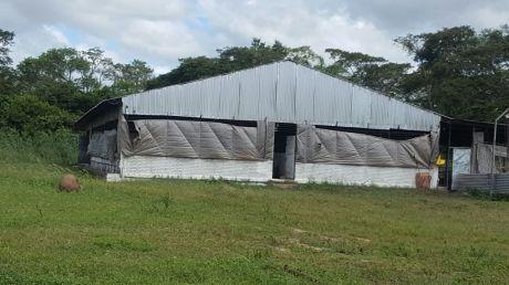 Vendo Granja Porcina En Pleno Funcionamiento Por Zona Franca Carretera A Warnes