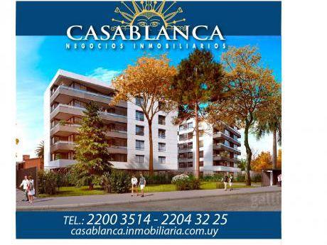 Casablanca - Nostrum Rosedal