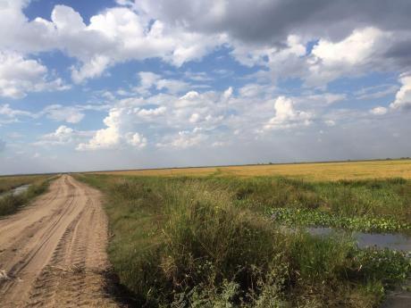Vendo 1.600 Hectareas Para Arroz En Paraguay! Misiones.