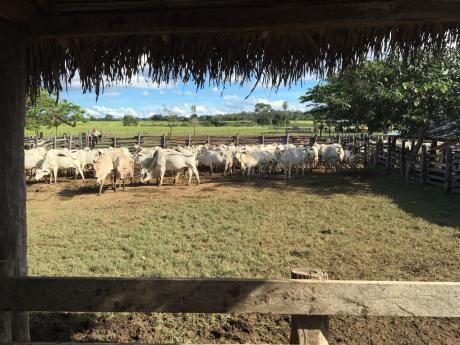 Venta De Propiedad Ganadera Y Agrícola De 11300 Hectáreas. A 6.500.000 Usd