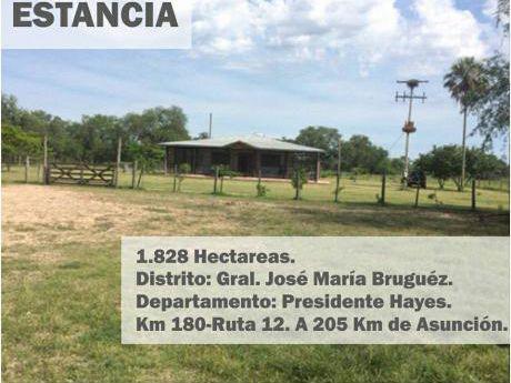 Estancia De 1.828 Has En JosÉ MarÍa BruguÉz/presidente Hayes.