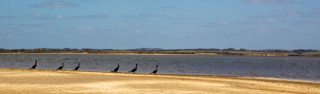 Laguna José Ignacio