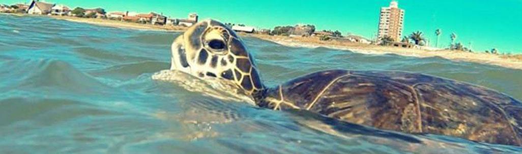Karumbé - Centro de tortugas marinas