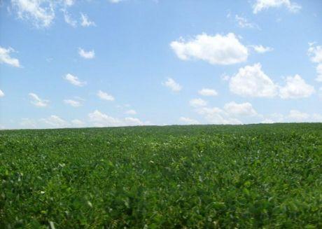 Itapua Vendo 700 Has De Terreno  Agricola Ganadera Y Forestal