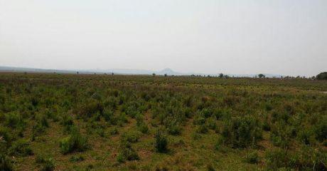 Paraguari, Ybucui, Terreno Ideal Para Agricultura Y/o Ganaderia