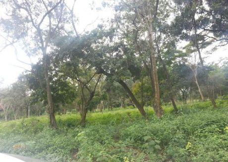 Atención Ypane! Nuevos Lotes En Esquina, Zona Alta Y Poblada