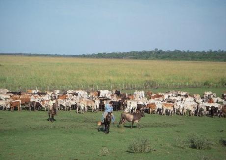 1126 Has. Mbuyapey, Colonia María Antonia- Potrerito , Paraguari.
