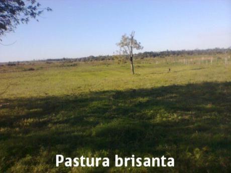 ¡¡¡vendo Establecimiento Ganadero A 8 Km. De La Ciudad De Santani!!!