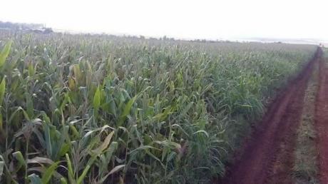 60 Hectareas Agricolas En Edelira 5.. Oferta!