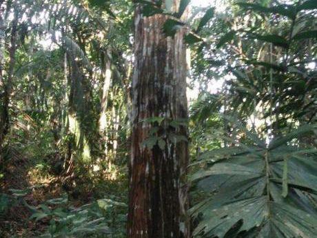 Terreno 63 Has Moralillos I Zona En Iquitos