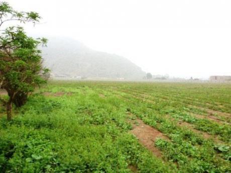 Terreno Pachacamac - El Guayabo