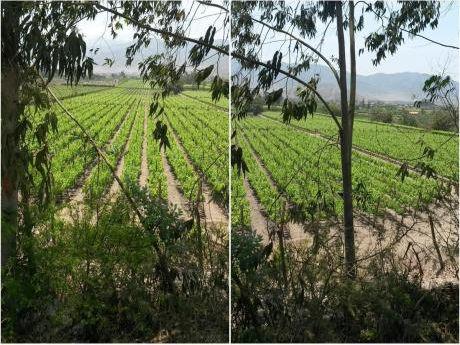 Terreno Agrícola, Cultivado Con Uvas En Azpitia