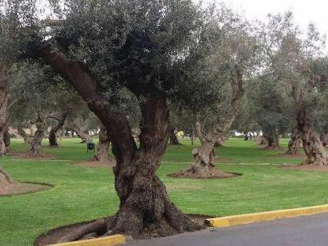 San Isidro. Venta De Lindo Departamento Frente Al Bosque El Olivar