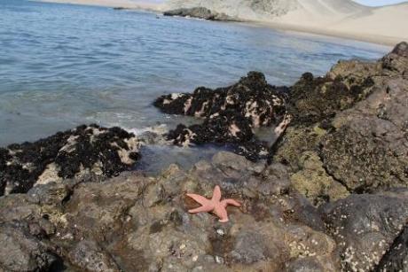 Tu Casa De Campo Frente Al Mar, Ver Video Aqui 120 M2 En 1000 M2.precio Actualizado