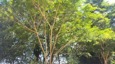 Estancia En El Chaco Paraguayo