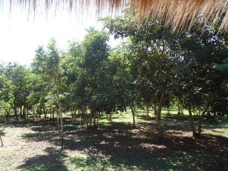 Hermosa Quinta De 5 Hectáreas En Mbatoví