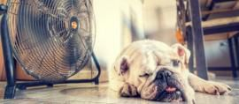 Cómo ganarle al calor este verano