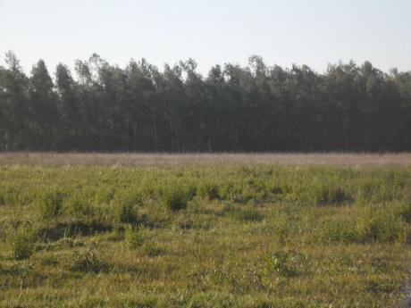 Caaguazu Agricola Ganadera