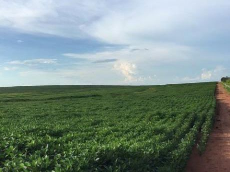 Propiedades Sojeras En Caaguazu Cerca De La Ruta