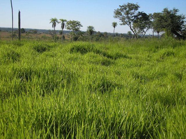 Hermoso Establecimiento Para Agricultura O Ganaderia Zonasantani