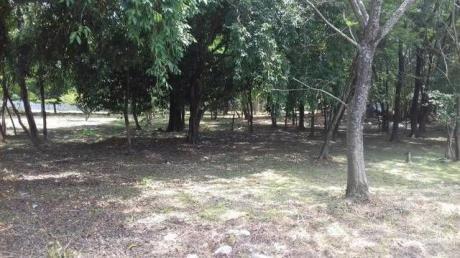 Remato Hermosos Terrenos En Luque En El Centro Y Zonas AledaÑas!!