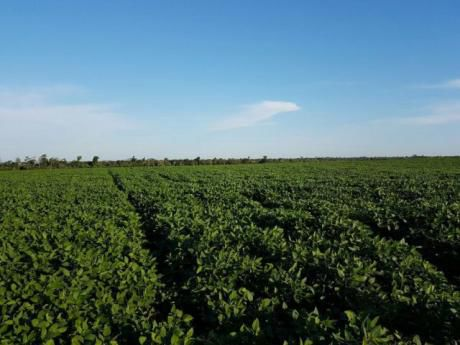 Vendo Campo Sojero De 3.720 Hectareas En Santa Rita