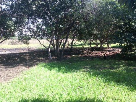 Vendo Terreno De 4.200 M2 En San Juan Del Parana - Itapua