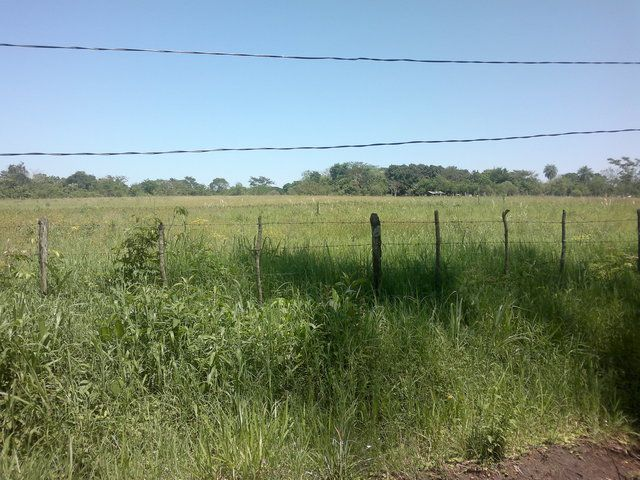 TERRENO: Vendo Terreno De 10.000 M2 En San Juan Del Parana en San Juan del Paraná