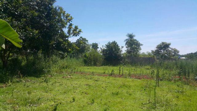 Vendo 5 Terrenos Juntos En Km 9 Acaray